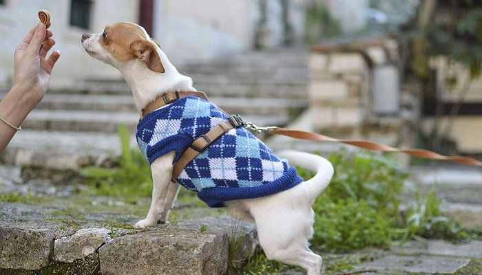 5 Tips for Choosing Dog Treats