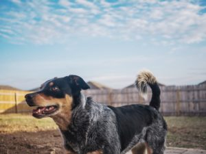 Tips for a Happy Dog and Yard