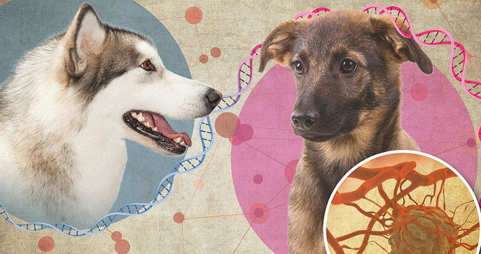 CBD Oil for Dogs With Cancer – Can CBD Really Help?