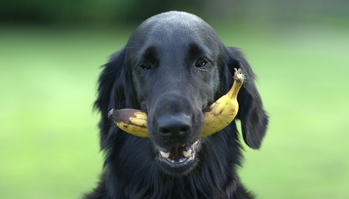 Vegan Dogs: How Does it Work, and Are They Healthy?