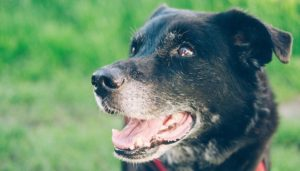 Help Your Dog's Sensitive Stomach