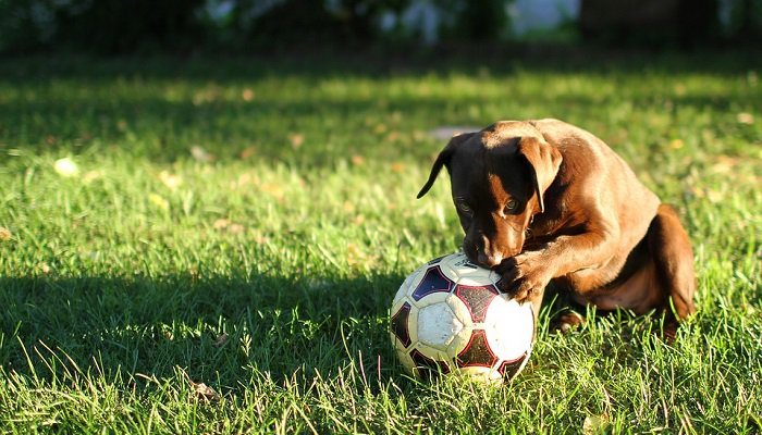 How to Grow Grass When You Have Dogs Around