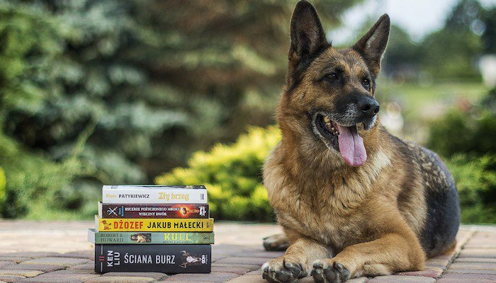 Should I Trust Books When Training My Dog?