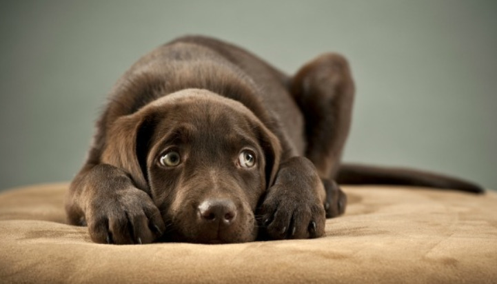 CBD for Dogs With Anxiety