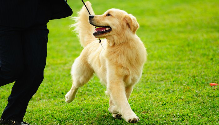 10 Best Omega 3 Supplements for Dogs in 2021