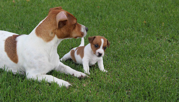 Importance of Worming Pets