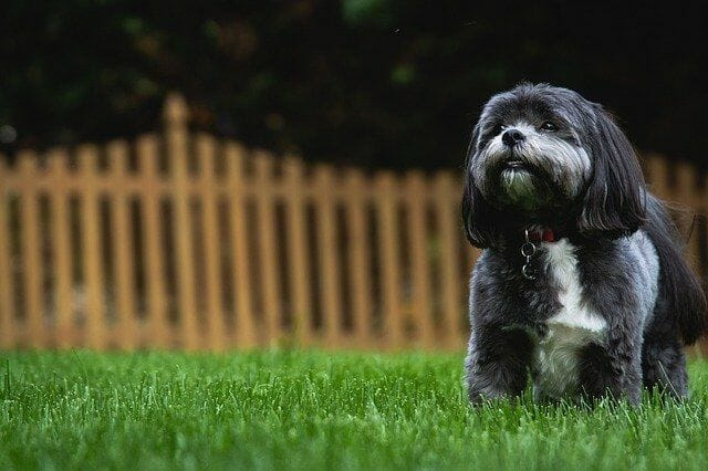 How We Picked the Best Wireless Dog Fence