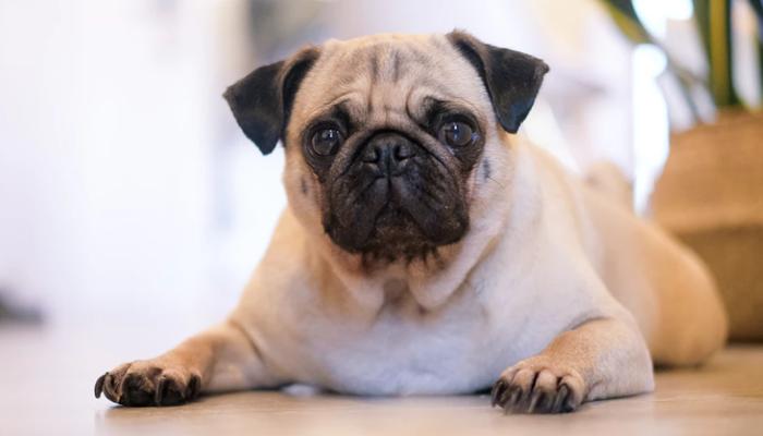 10 Best Diet Dog Foods in 2021