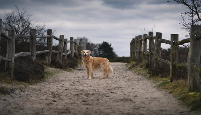 7 Best Wireless Dog Fence Systems in 2021