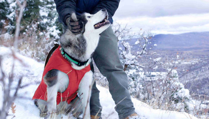 10 Best Dog Jackets for Winter 2020