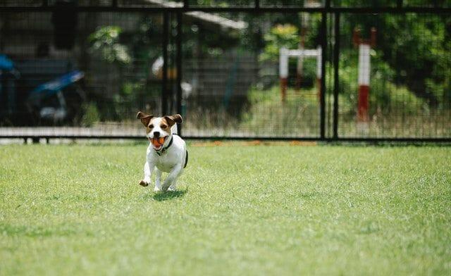 Are Wireless Dog Fences Safe?
