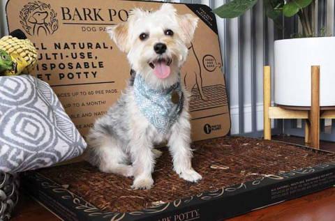 bark potty