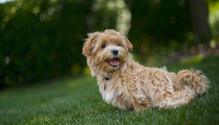 Probiotics – A Pet Owner's Guide