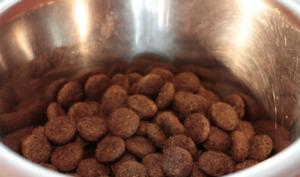 Dog food on aluminum bowl