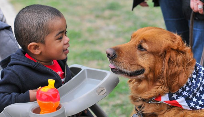 10 Best Therapy Dogs for Emotional Support