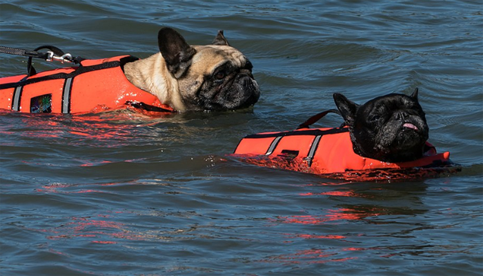 10 Best Dog Life Jackets In 2021
