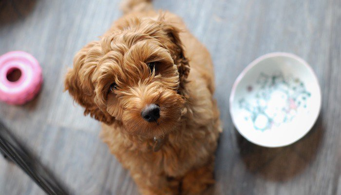 Best Dog Mixes in 2021 (Our Favorite Mixed-Breed Dogs)