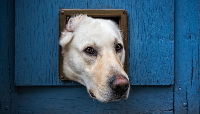 10 Best Dog Doors in 2021