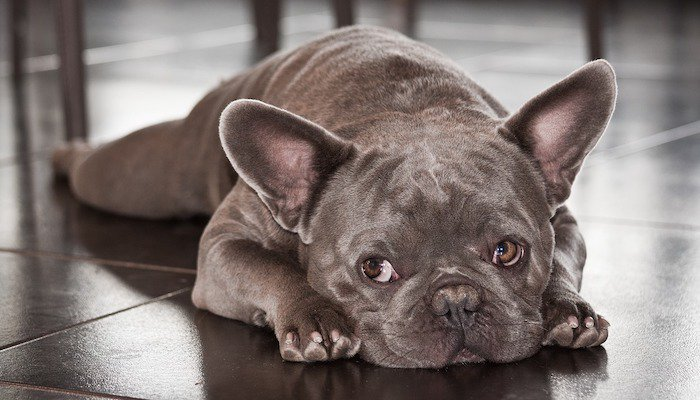 Hemp Oil Products That Can Help Your Dog