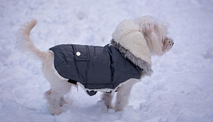 10 Best Dog Coats In 2021