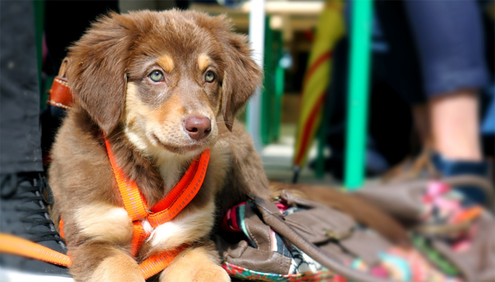 10 Best Dog Leashes in 2021