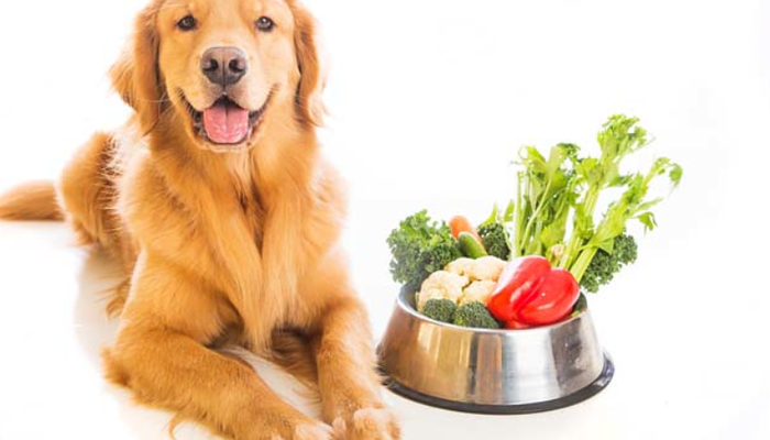 The Best Dog Food For Diabetic Dogs in 2021