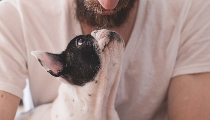 8 Best Dog Breeds for Anxiety