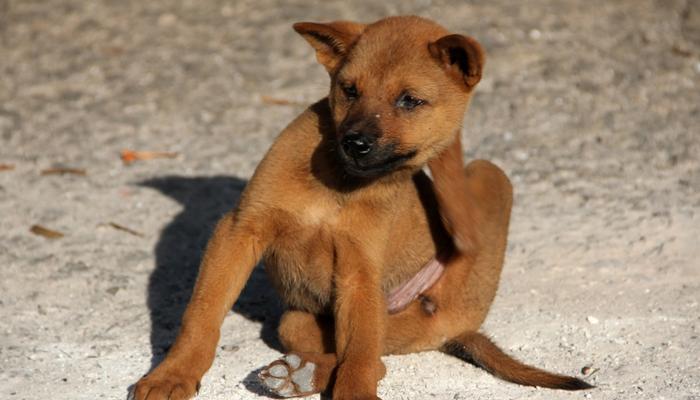 7 Best Flea Sprays for Dogs in 2021