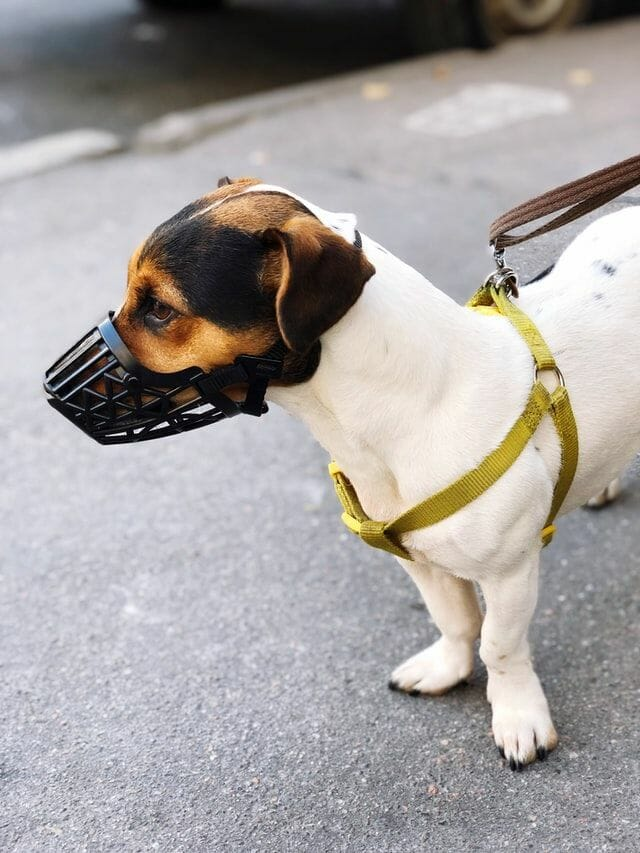 Best Muzzle for Small Dogs