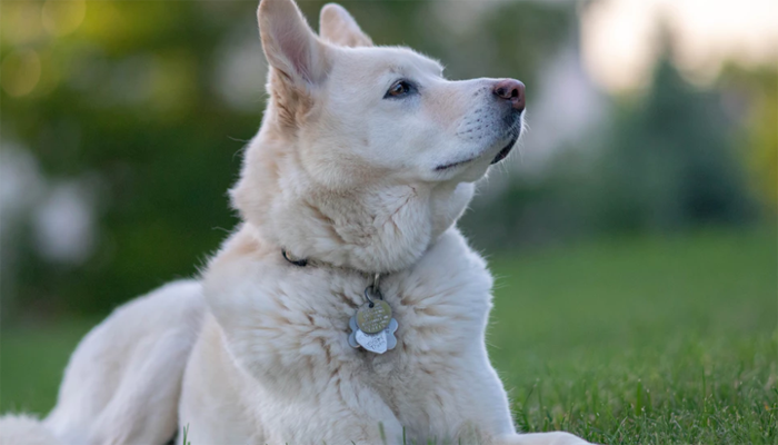11 Best Dog Tags in 2021