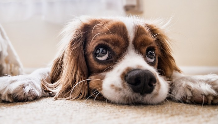 7 Best High-Fiber Dog Foods For Anal Gland Problems in 2021