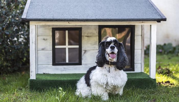 10 Best Dog Kennels in 2021