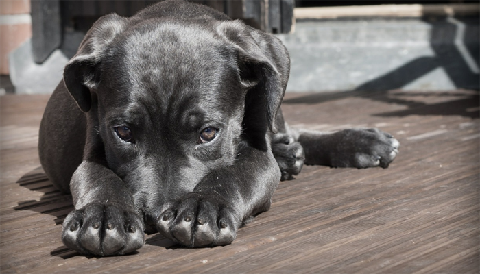 How to Tell if Your Dog is Hungry or Greedy?