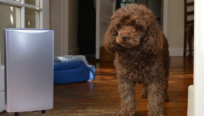 Best Air Purifier For Pet Odors