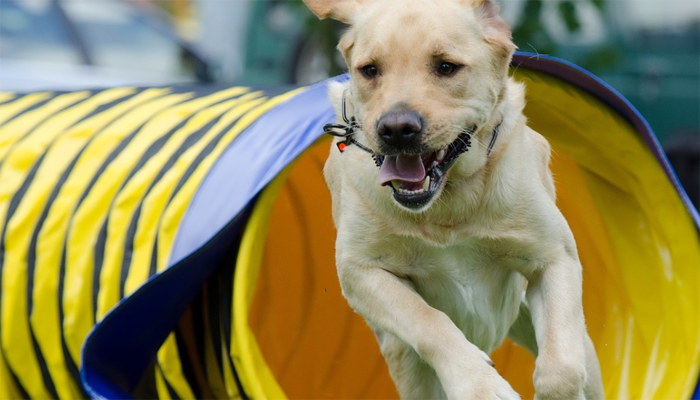 5 Best Dog Agility Tunnels in 2021