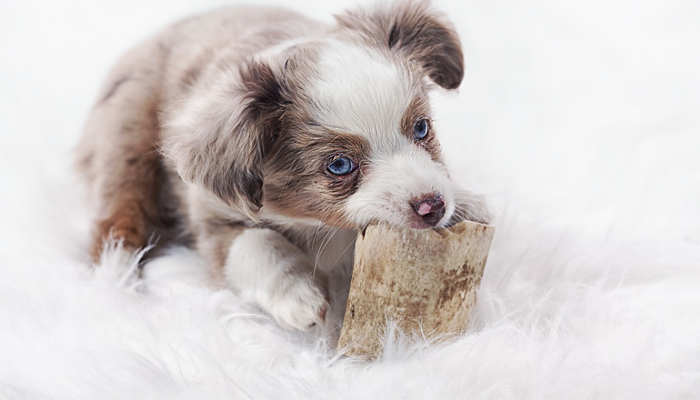 Best Chew Toys for Teething Puppies in 2021