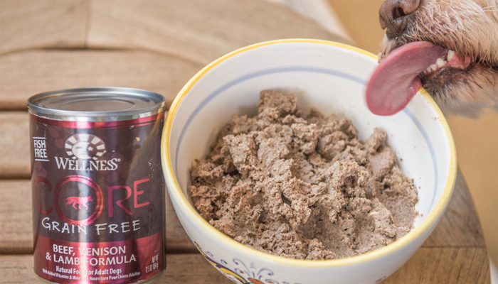 Wellness Core Dog Food Review (2021)