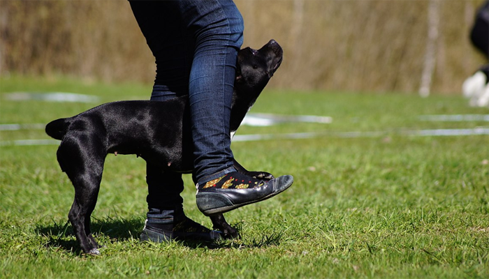 Musical Canine Freestyle: A Sport Combining Dance and Obedience