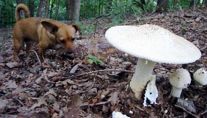 Dog and Mushrooms