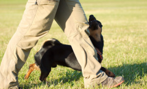 Dog following persons leg