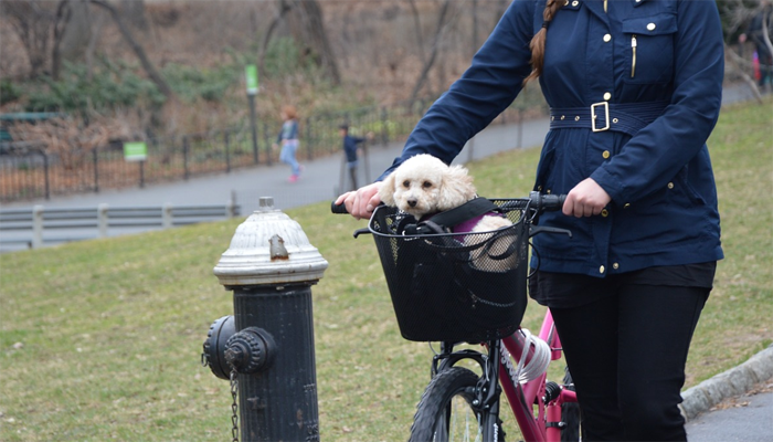 10 Best Dog Baskets for Bikes in 2021
