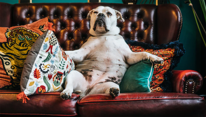 8 Best Dog Couch Covers in 2021