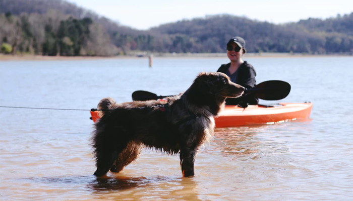 How to Train a Dog to Kayak