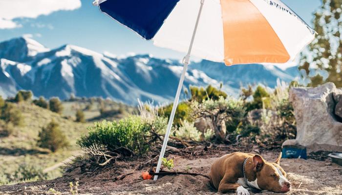 6 Best Umbrellas For Dogs in 2021