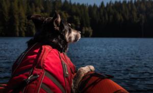 Dog wearing life vest