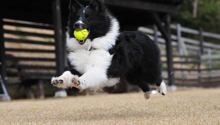 Flyball: A Beginner's Guide