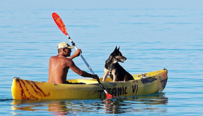 Ultimate Guide to Kayaking with Dogs