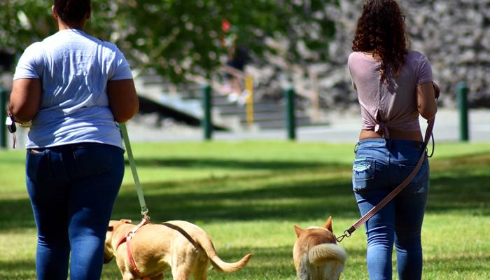 Dog Park Etiquette: Dos & Dont's