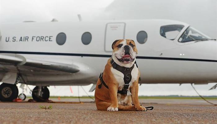Air Travel with Dogs (2021 Guide)