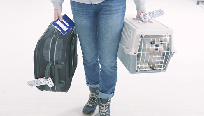 11 Best Airline Approved Pet Carriers in 2021